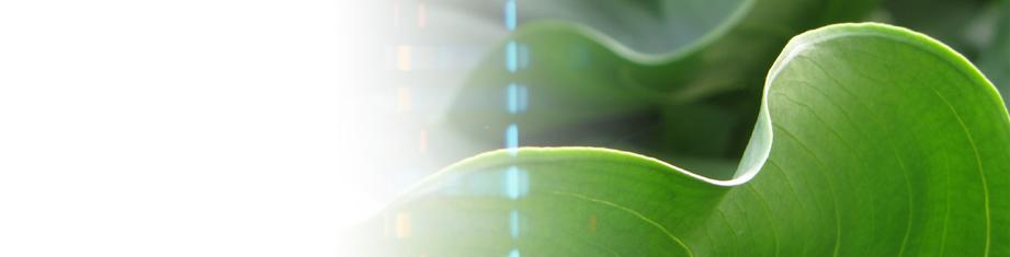Extraits plantes médicinales