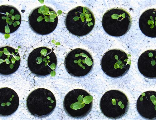 Extraits plantes fraîches / API